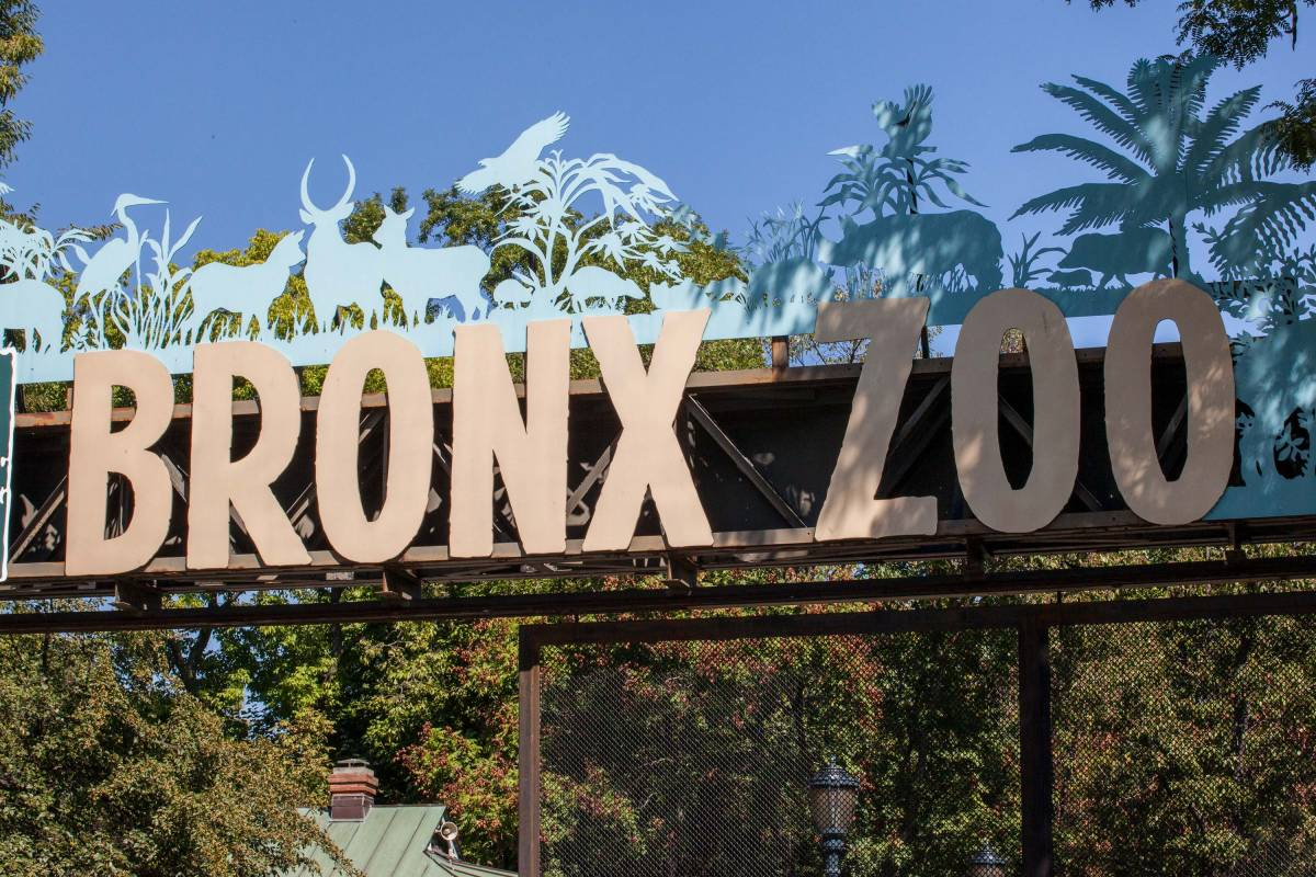 Guide To The Bronx Zoo The Bronx