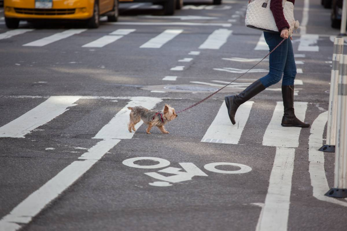 Visiting new york city with pets dogs cats pet for Dog friendly hotel nyc