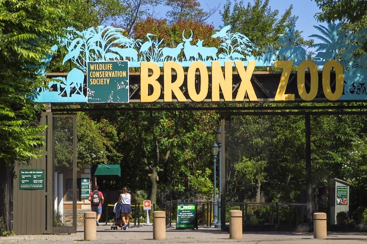 The bronx the official guide to new york city for Hippest hotels in nyc