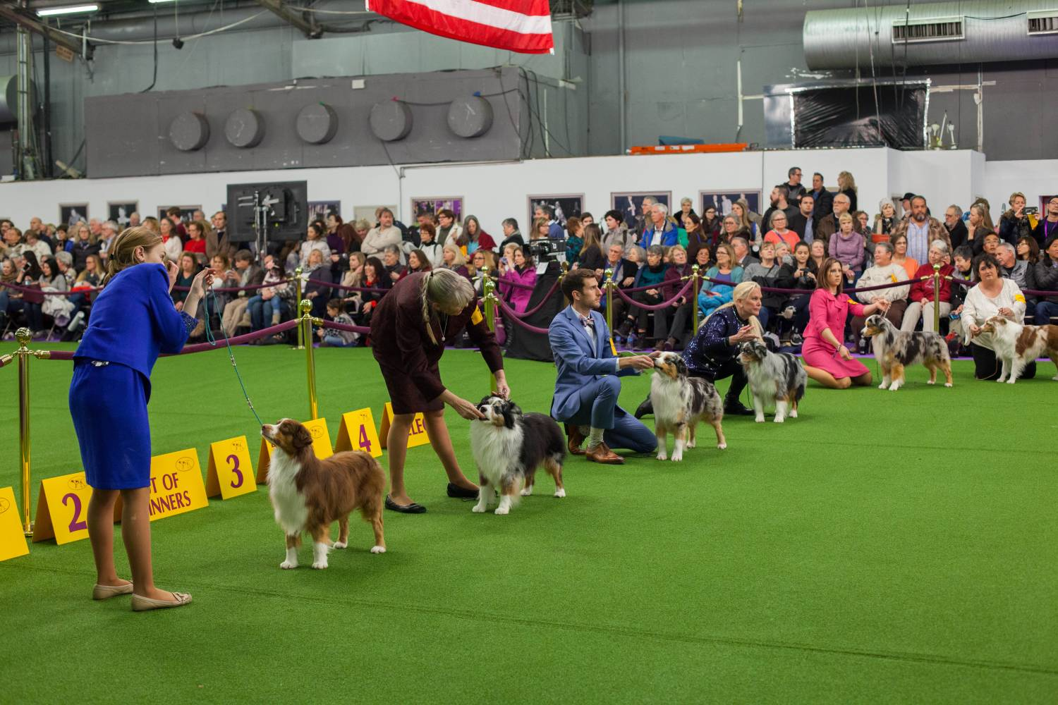 Watch Westminster Dog Show 2020.The Westminster Kennel Club Dog Show