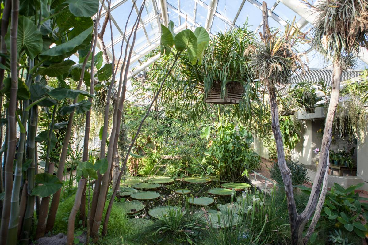 Free Tuesdays At The Brooklyn Botanic Garden Official Guide To New York City