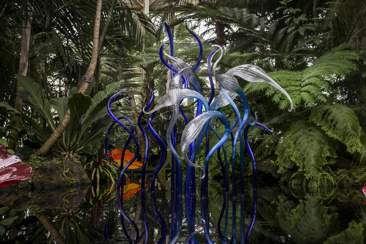 dale chihuly at the new york botanical garden the official guide