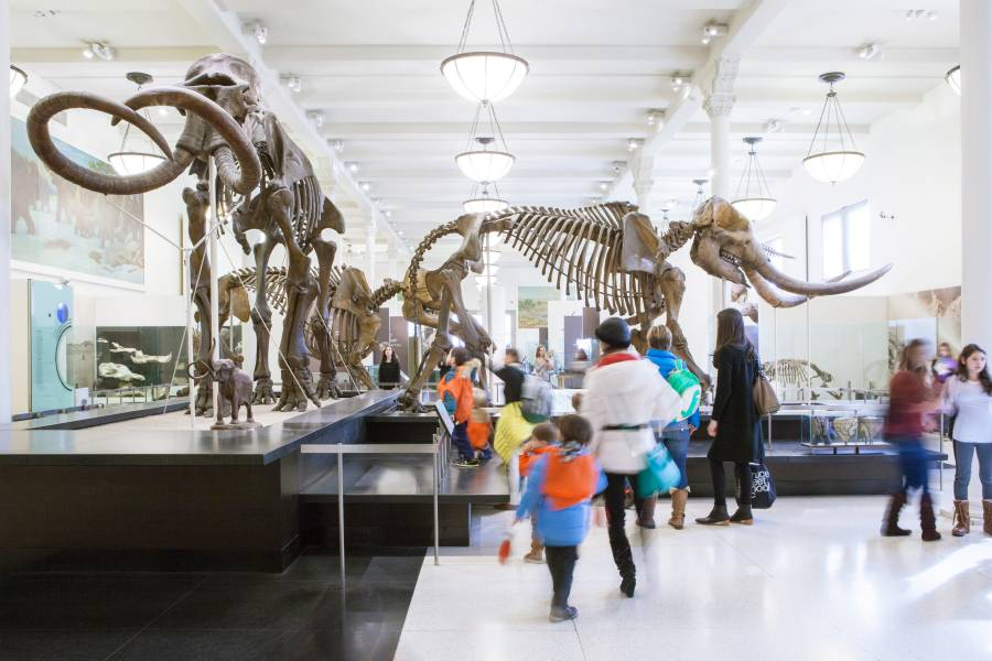 museums in nyc Some of the best museums in nyc are also some of the most obscure check out this blog to see what you've been missing.