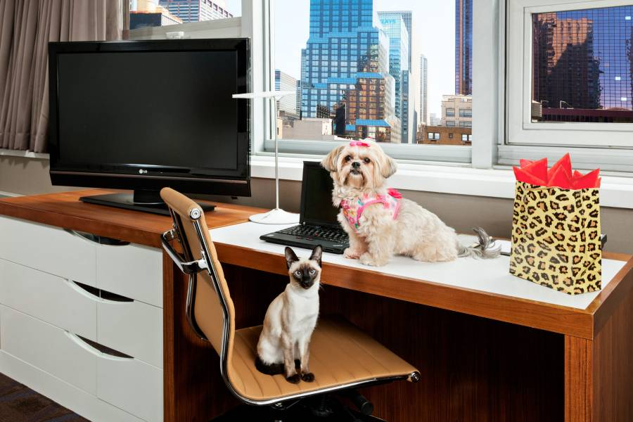 Pet Friendly Hotels In Nyc