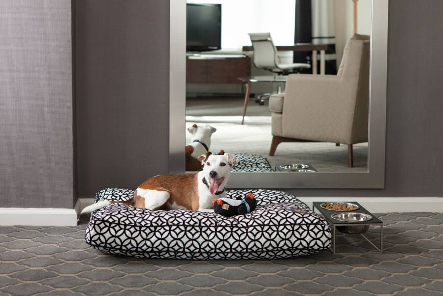 pet friendly hotels in new york city