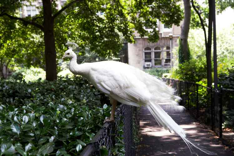 Bird at Cathedral of Cathedral Church of St.John the Divine in Manhattan