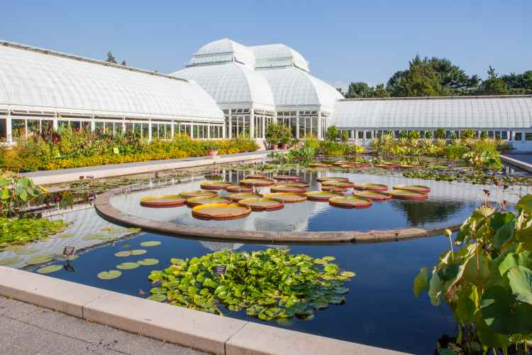 The conservatory at the New York Botanical Garden