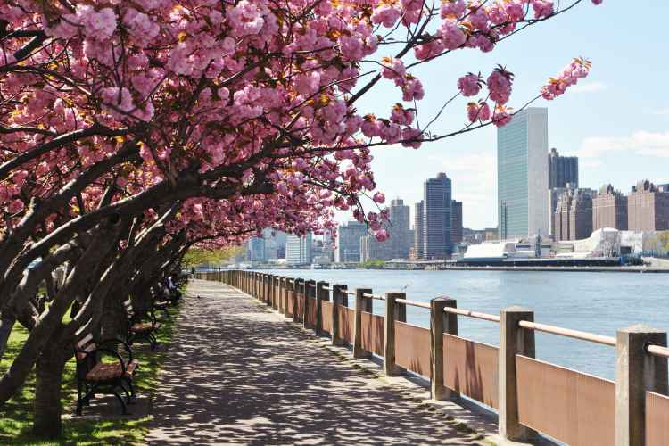 Roosevelt Island promenade and cherry blossoms