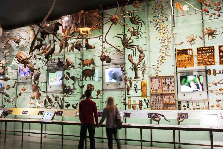 American Museum of Natural History, wall