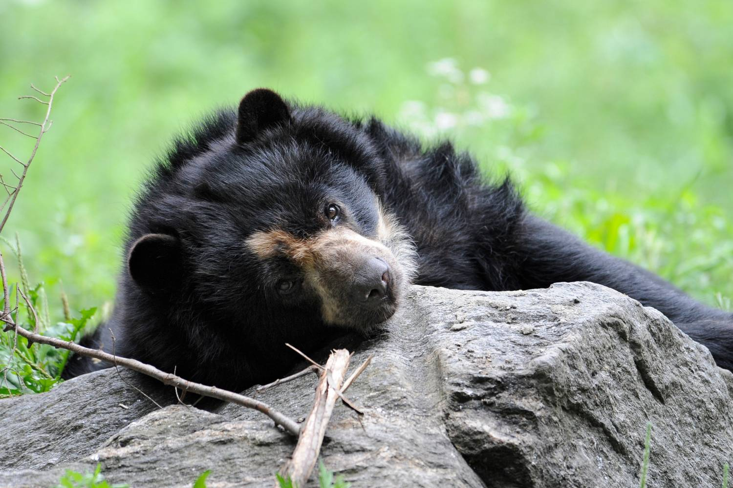 andean bears at Queens Zoo