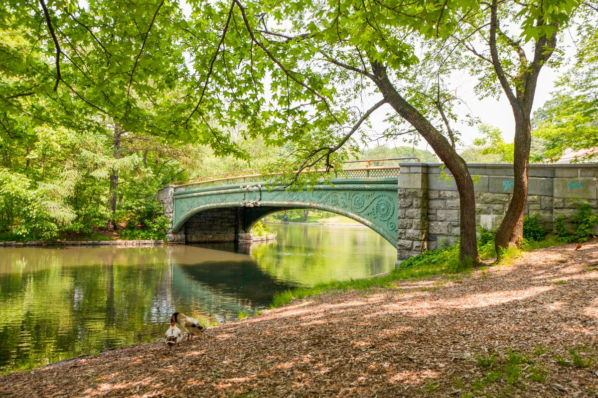 Prospect Park Loop: Rules, Runners, and Rental Bikes in ...  |Prospect Park Brooklyn