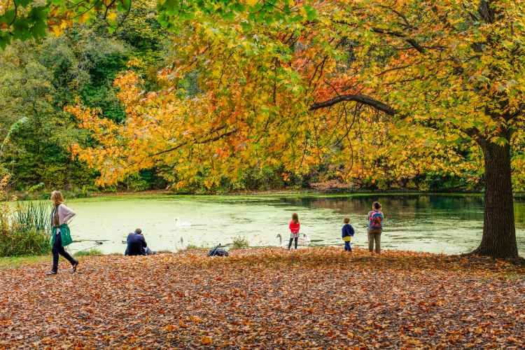 Prospect Park pond in the fall