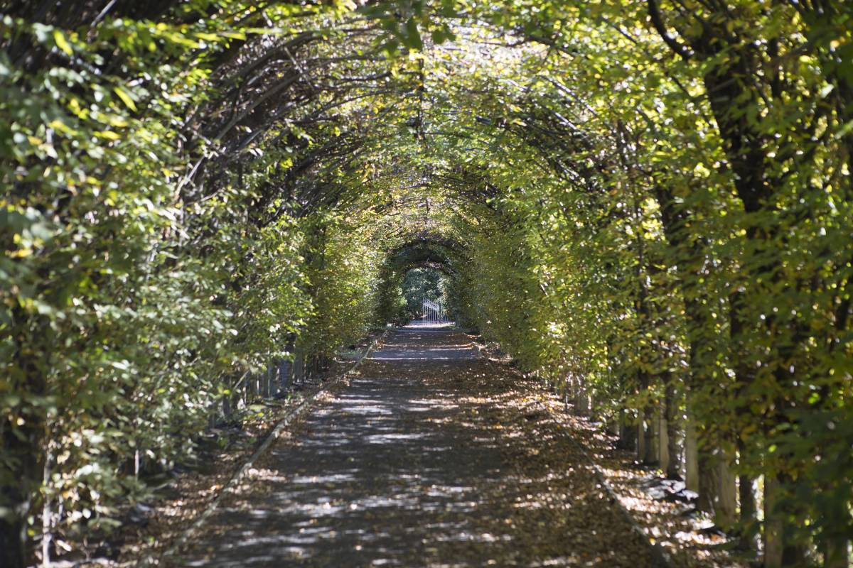 Check Out The Museums, Botanical Gardens And Maritime History At Staten  Islandu0027s Snug Harbor